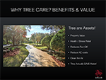 Tree 101-benefits and value